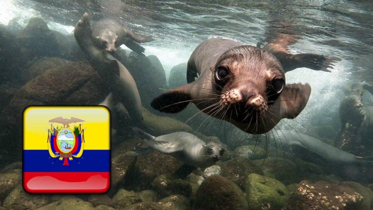 Comprar vivienda en cualquier ciudad de Ecuador desde el extranjero